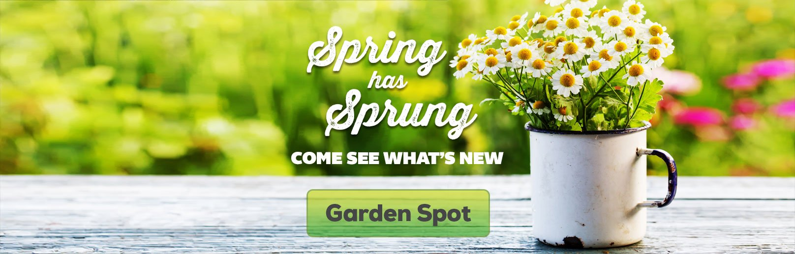Spring At Art Knapp Surrey - Plants, Flowers & More