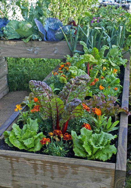 Container Gardening in Apartment Patios