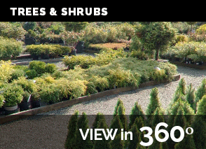 Shrubs.png