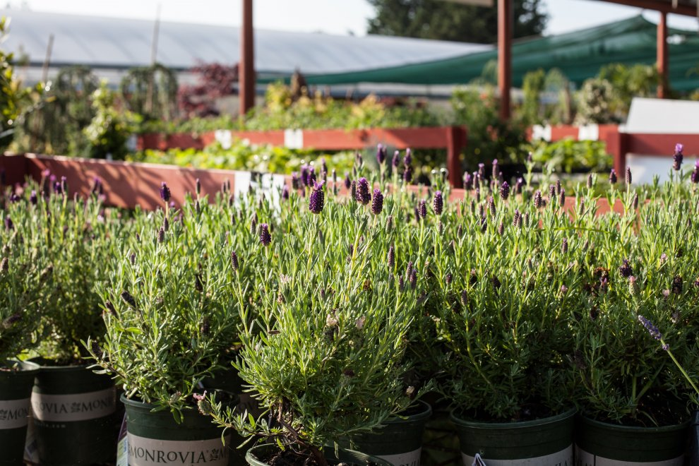 Plants and Trees Surrey | Herb & Vegetable Garden Centre